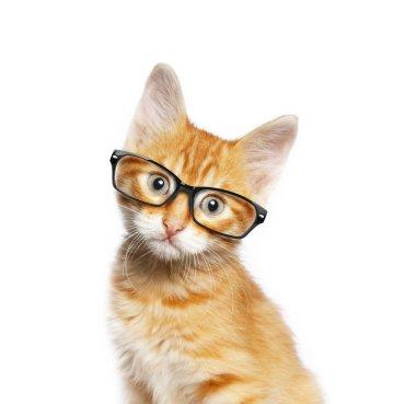 Red cat in glasses
