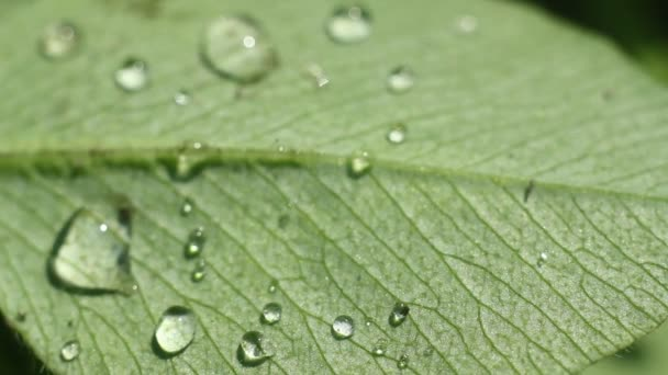 Clear raindrops form delicate patterns on a gently swaying leaf.