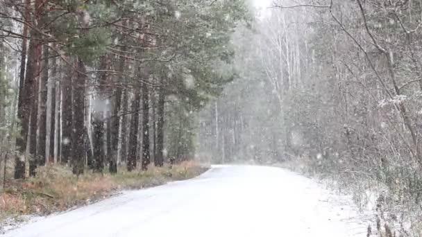 Lesní stromy s padající sníh