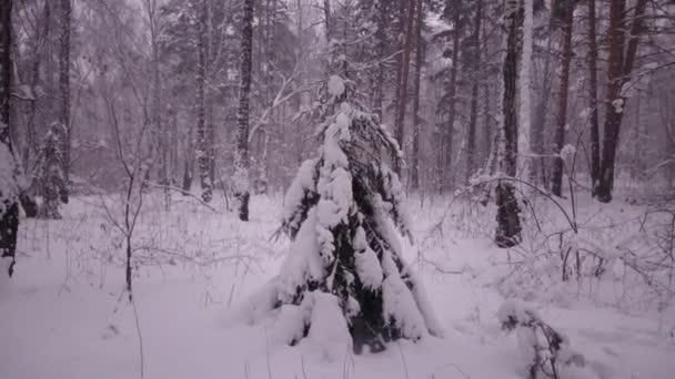 Téli erdő háttér. Hónap.