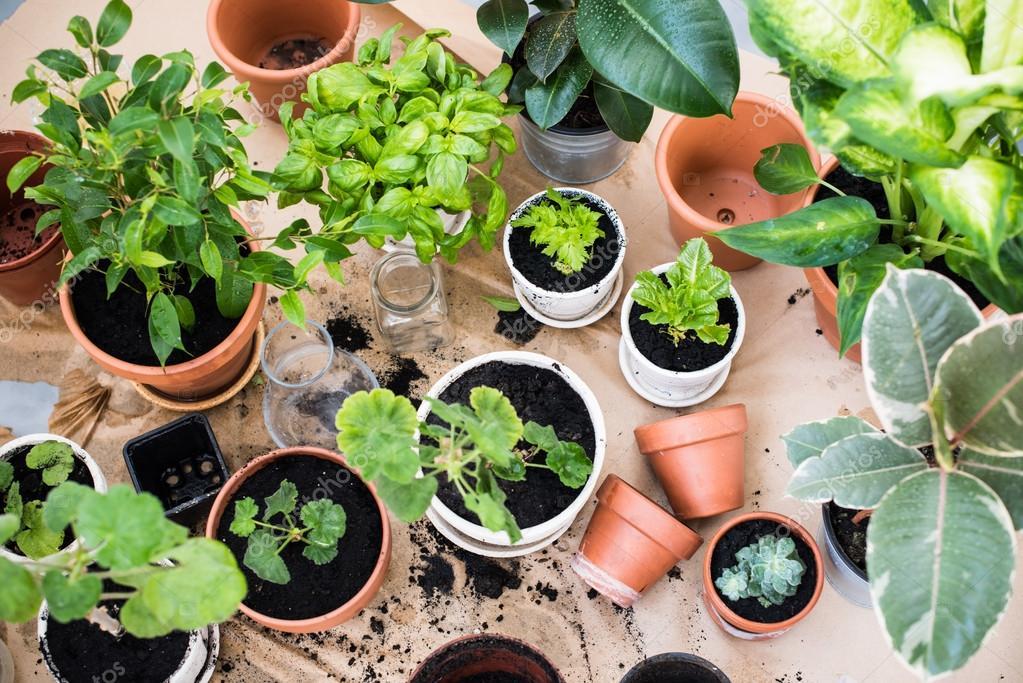 Tuinieren Op Balkon : Balkon tuin u stockfoto manera