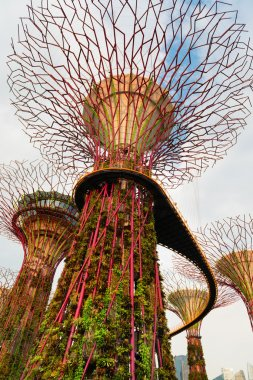 Walking bridge on Super trees in Gardens by the Bay Singapore