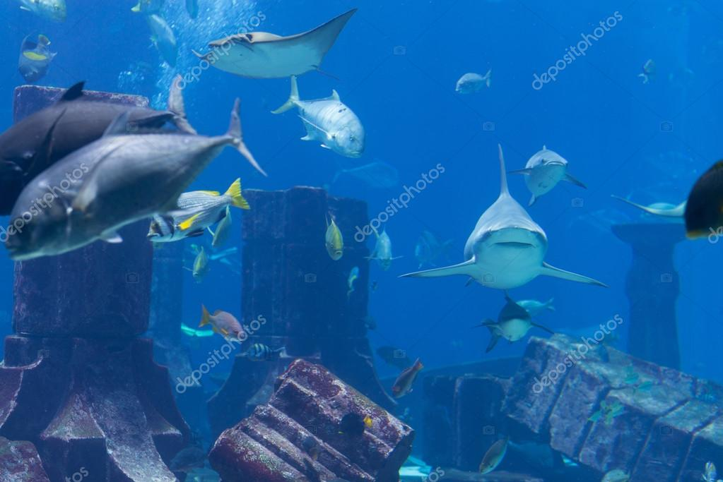 Sharks, Rays and Other Large Fish at a Public Aquarium