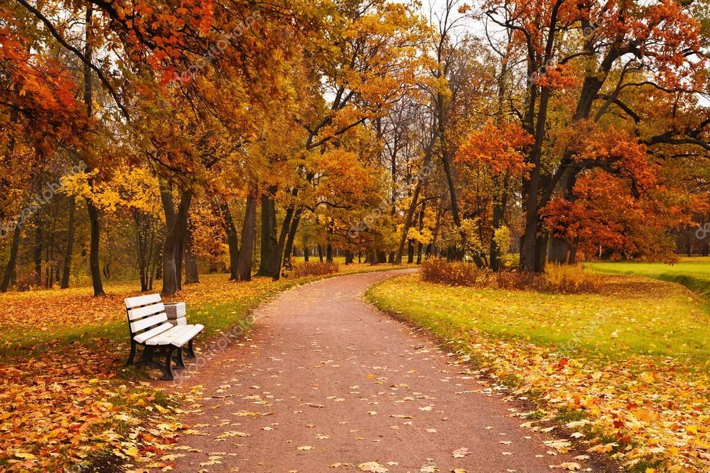 Camino Arboles Otoño Colores Otoño Arce árboles Hojas Caídas