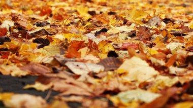 Colorful autumn leafs.