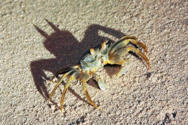 Crab on a sand