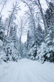 Fotografie beautiful winter scenery, snow-covered spruce forest