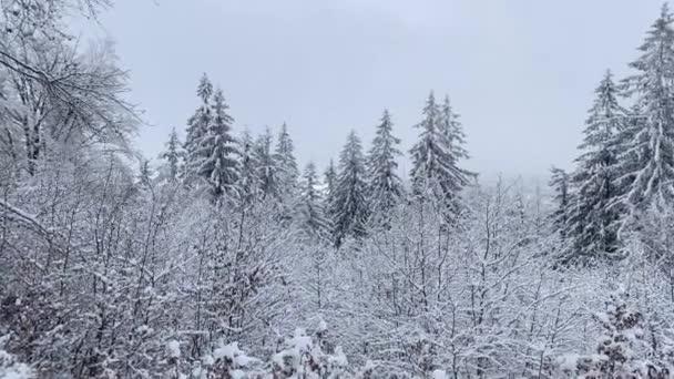 Winterwald mit Schnee bedeckt