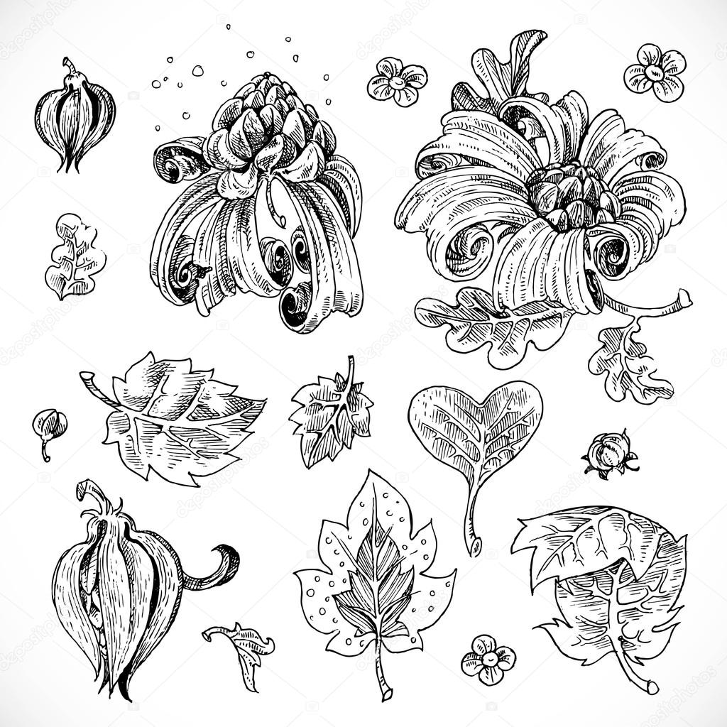 Black and white drawing fantasy flowers and leaves graphic eleme