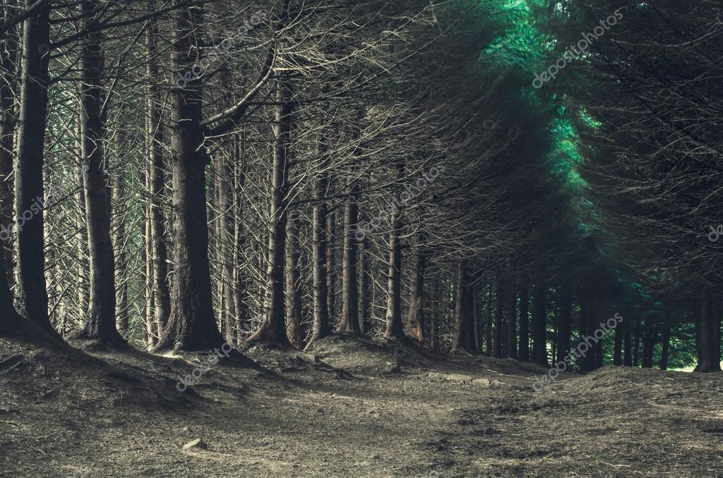 road through dark forest in autumn