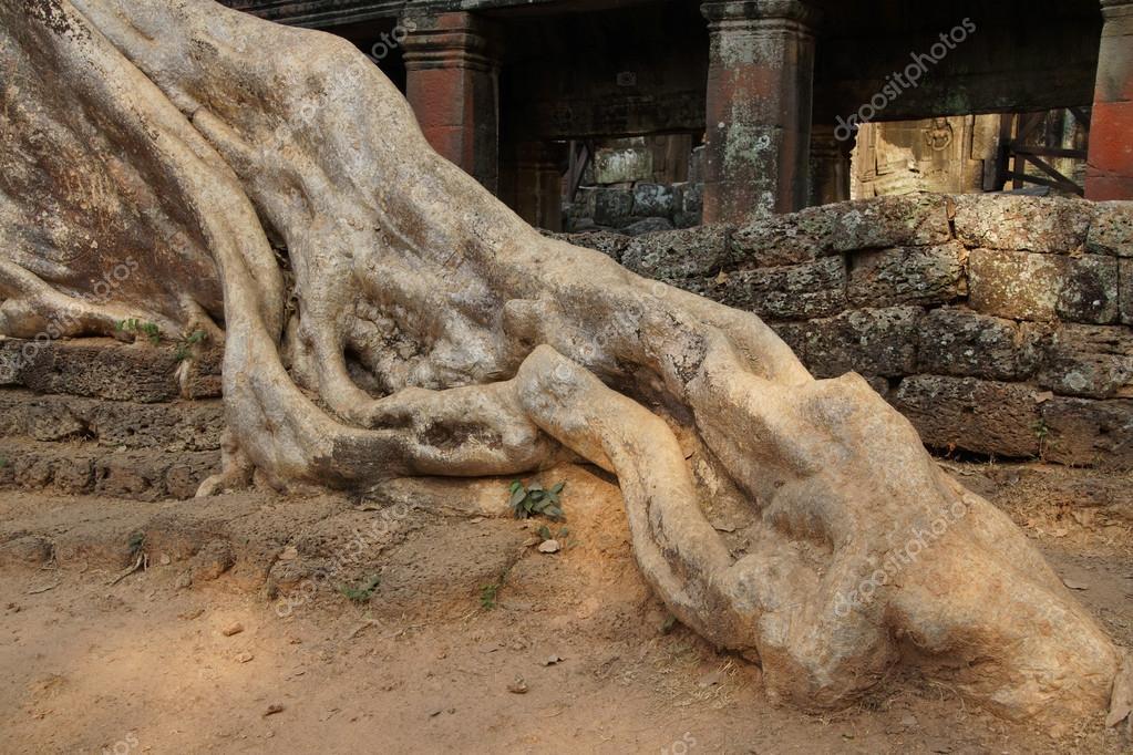 Terraza De Piedra Por El Enorme árbol De Foto De Stock