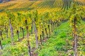 Podzimní vibrací v Lucembursku