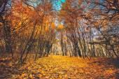 zlatý podzim v lese