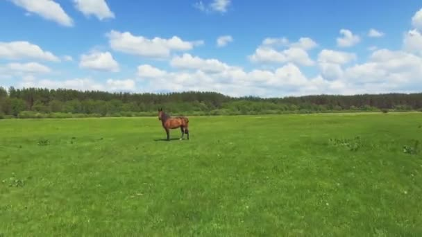 Green meadow with grazing horse