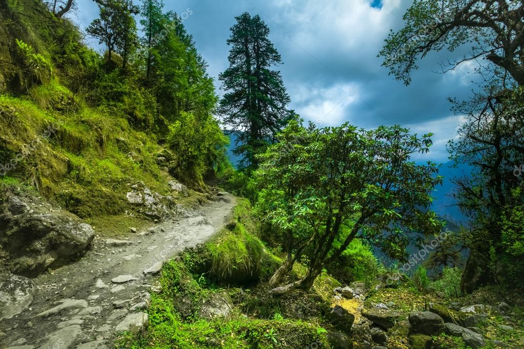Subtropical forest in Nepal