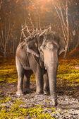 slon v Thajsku