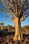 Toulec Les Namibie