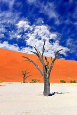 Dead Camelthorn Trees against red dunes and dramatic sky in Deadvlei, Sossusvlei. Namib-Naukluft National Park, Namibia, Africa stock vector