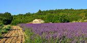 venkovské krajiny Provence