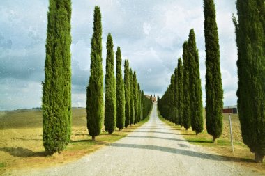 Idyllic Tuscan landscape with dirt road and cypress near Pienza, Italy. Filtered image, vintage effect applied (grunge, tone) stock vector