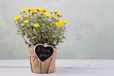 I love you - beautiful  flowers in pot with message card