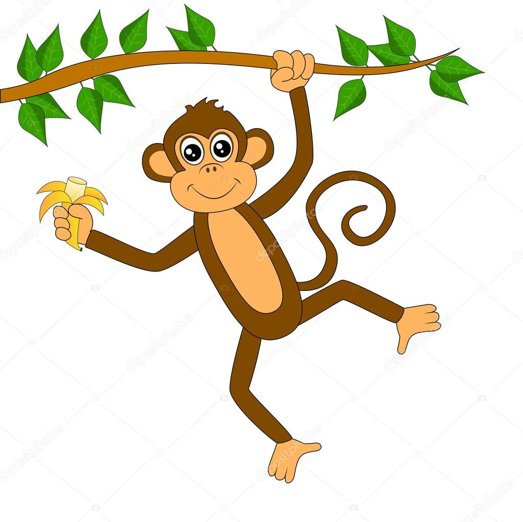 funny monkey on white background
