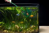 Údržba, prodej a chov akvarijních ryb doma.