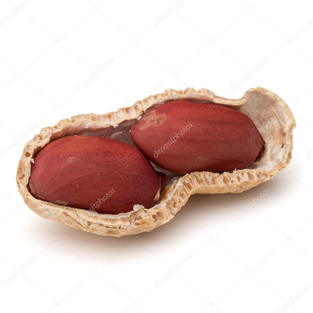 ouvert les arachides ou gousse d'arachide — photographie natika