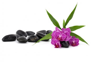 Zen pebbles and orchid flowers