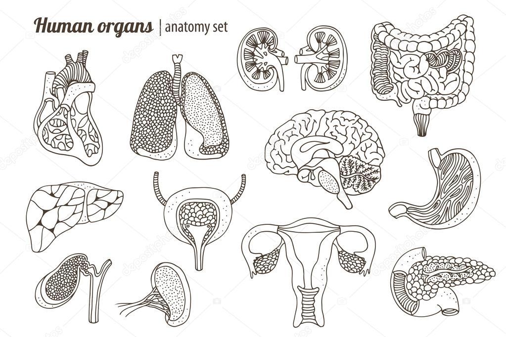 Menschliche Organe Anatomie Satz — Stockvektor © fandorina #117374030