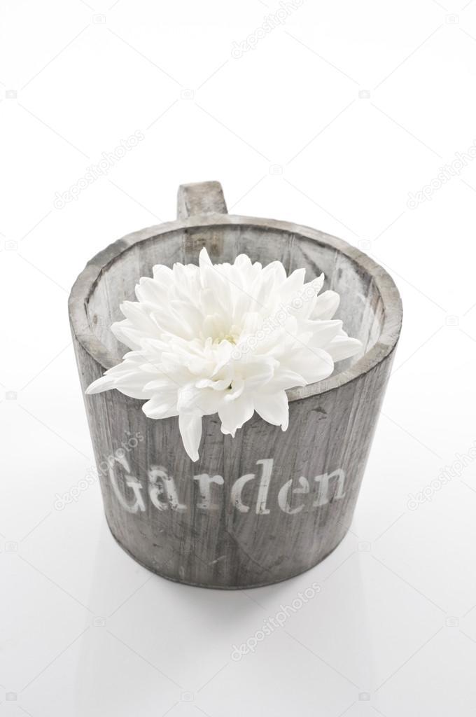 garten-ringelblume Konzept-Stillleben mit weiße Blume und Topf ...