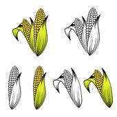 Kolekce sady kukuřice