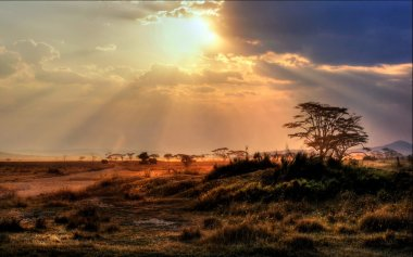gorgeous sunset with sunbeams on the savannah in Africa