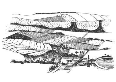 vineyard landscape ink  picture