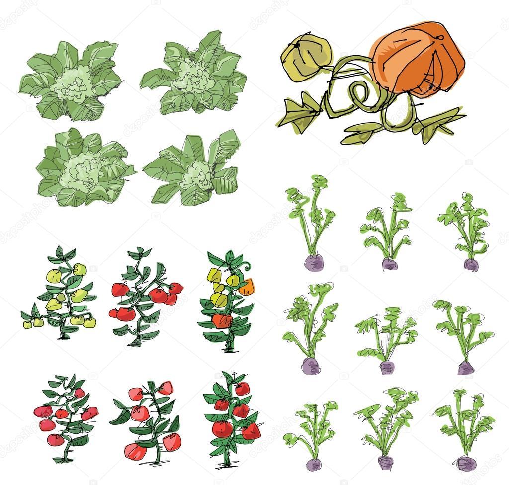 kitchen-garden - cartoon illustration — Stock Vector © iralu1 #88311736