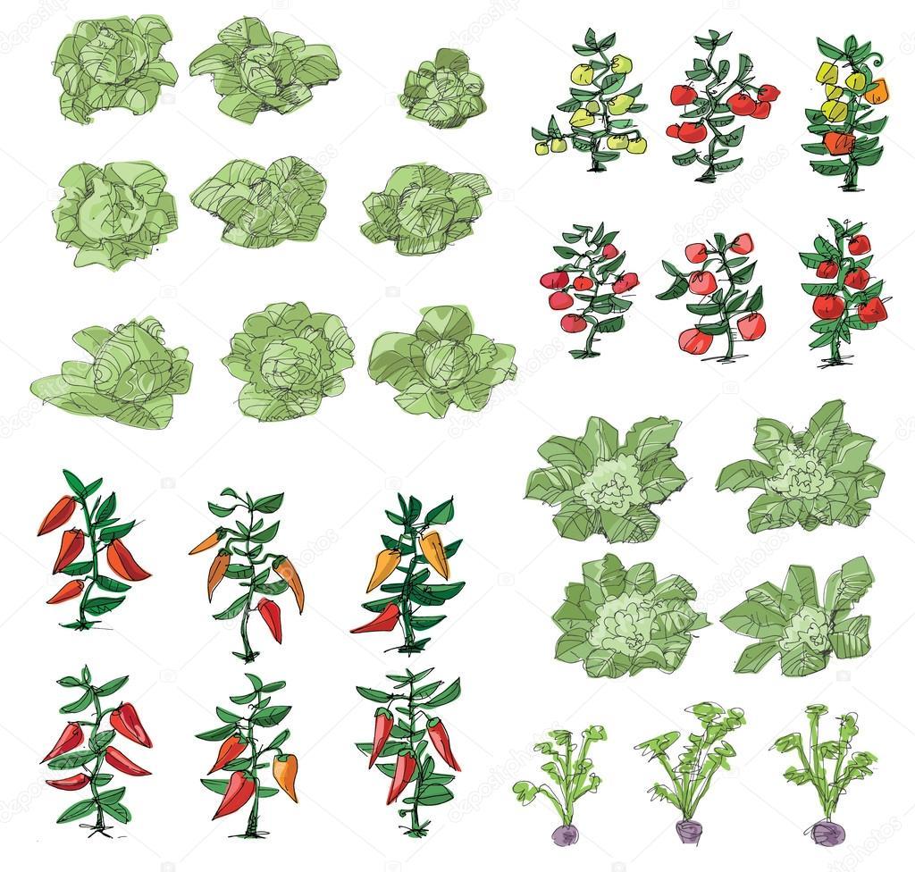 kitchen-garden - cartoon illustration — Stock Vector © iralu1 #88312932