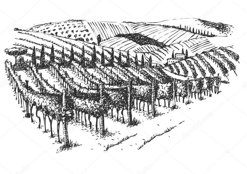 vineyard landscape ink  picture