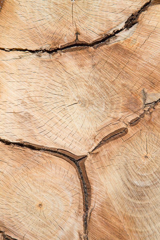 Fresh wooden texture