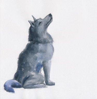 Grey Wolf watercolor