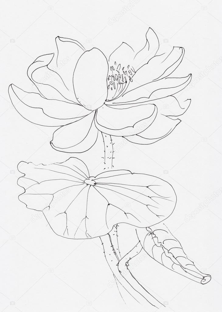 Line Art Flowers Husqvarna : 로터스 꽃 라인 아트 — 스톡 사진 surovtseva