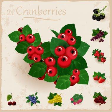 Vector berries vintage collection. Cranberries