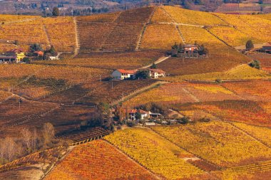 Hills and vineyards of Piedmont in autumn.