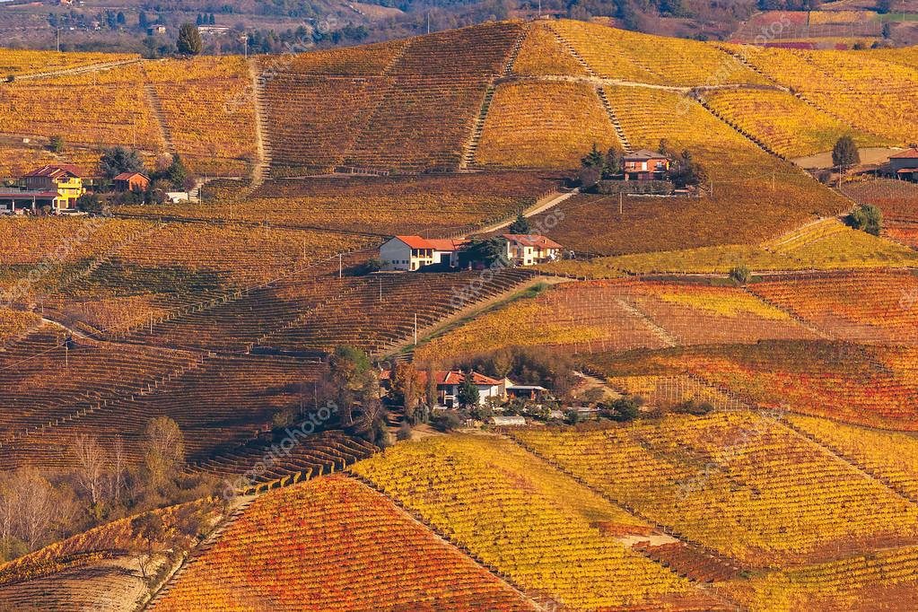 Hills and vineyards of Piedmont in autumn.