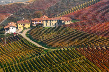 Colorful autumnal vineyards in Italy.