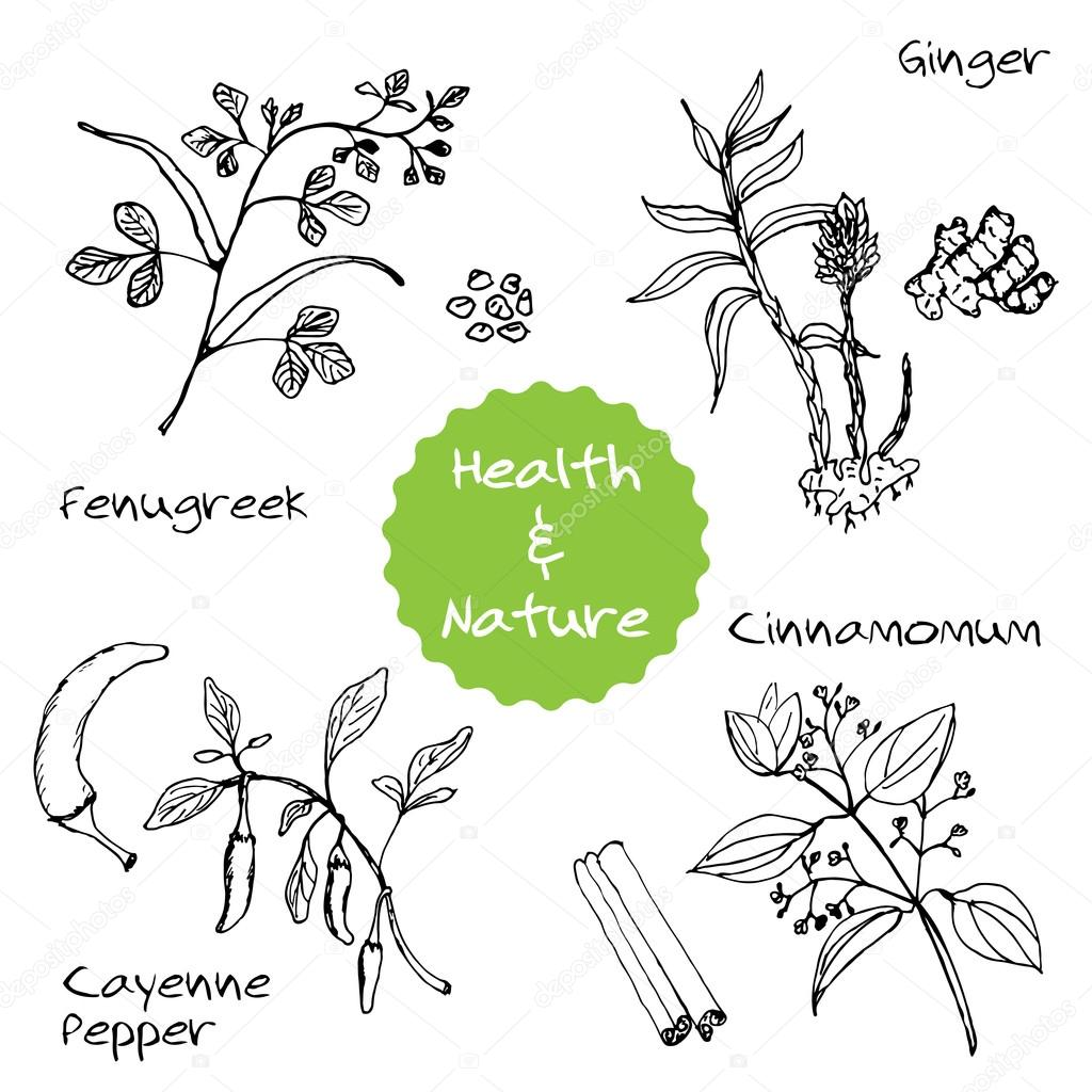 Handdrawn Set - Health and Nature