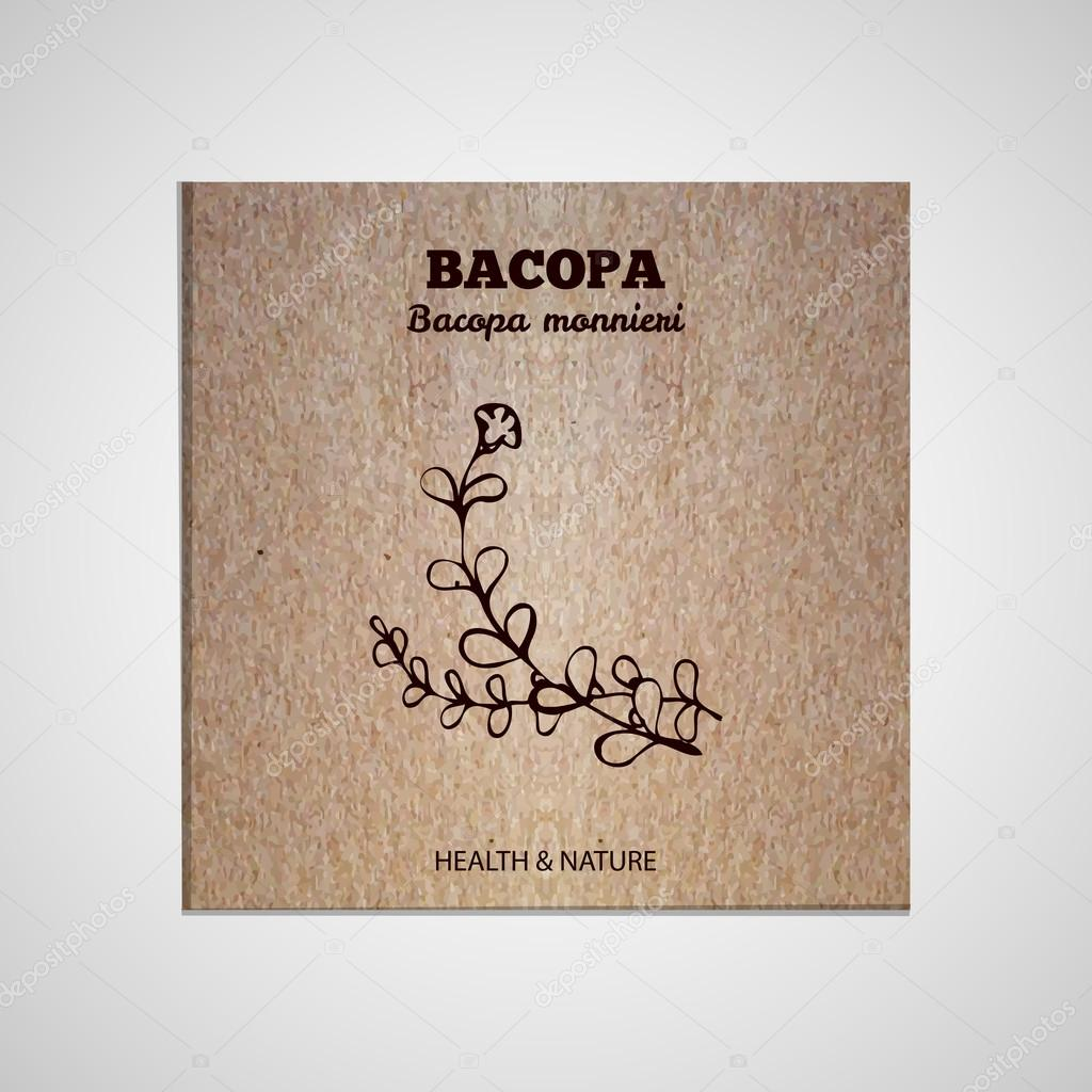 Herbs and Spices Collection - Bacopa