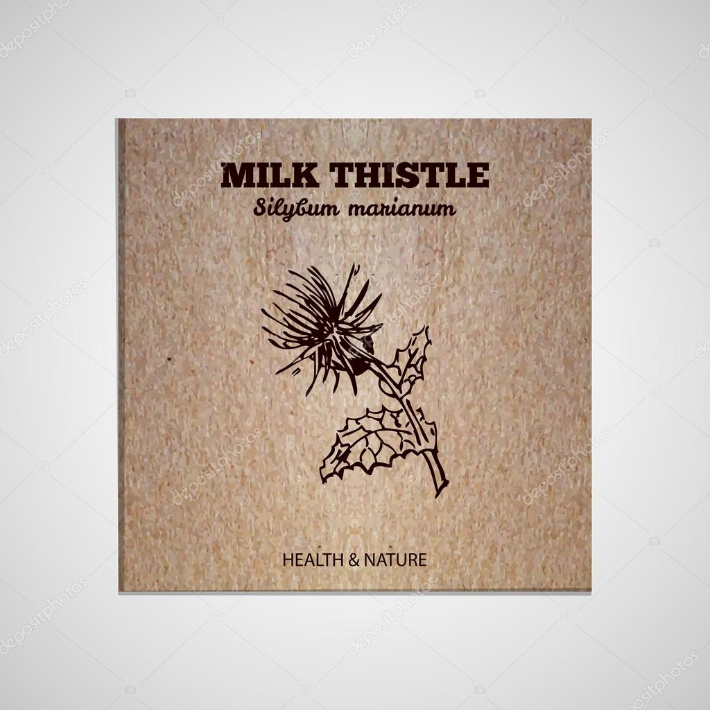 Herbs and Spices Collection - Milk thistle