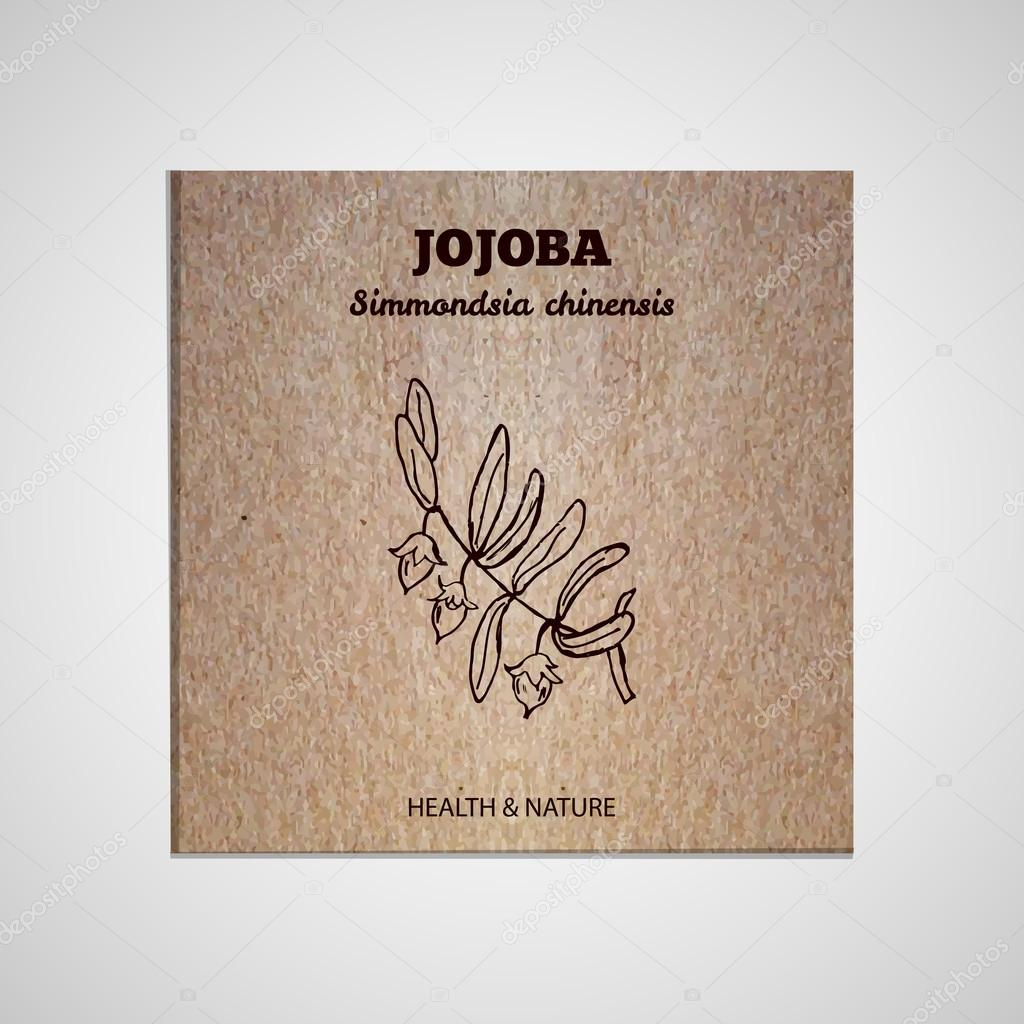 Herbs and Spices Collection - Jojoba