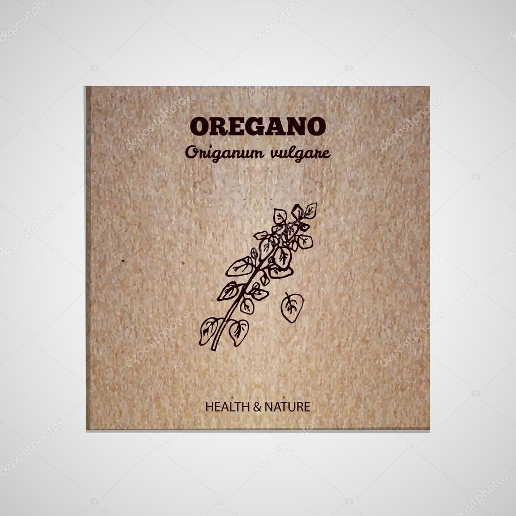 Herbs and Spices Collection - Oregano