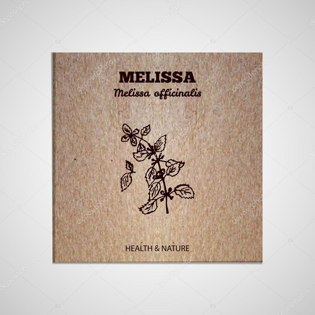 Herbs and Spices Collection - Melissa